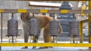 Swayambhunath Temple (Monkey Temple), Kathmandu