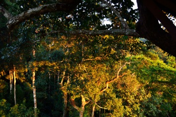 View from our tree house on the Gibbon Experience